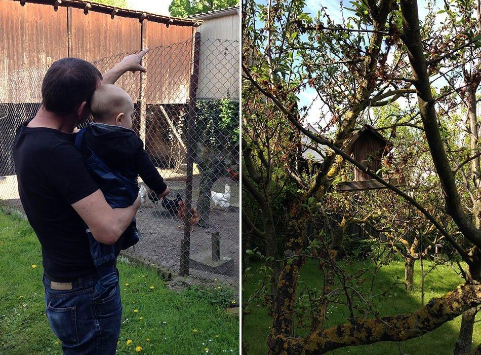 stunde der gartenvögel, draußen mit baby, naturfreunde, mamablog, ekulele, tier beobachten
