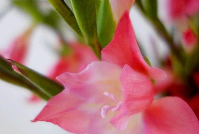 Blumen fürs Gemüt, jede Woche frische Blumen, ekulele, gemuet, balsam fuer die seele, frische blumen, stimmungsaufheller, blommy days (2)